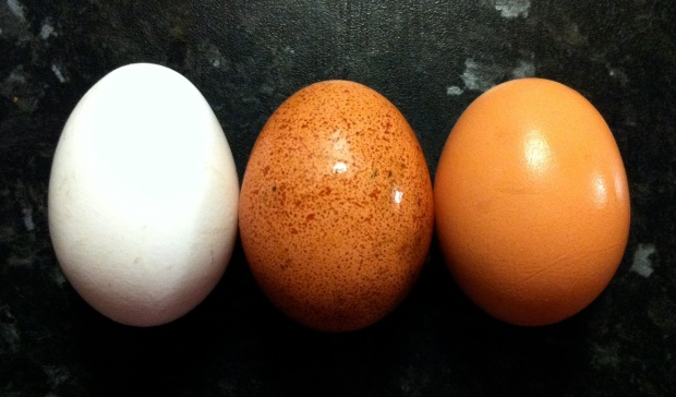 Egg_colours.jpg